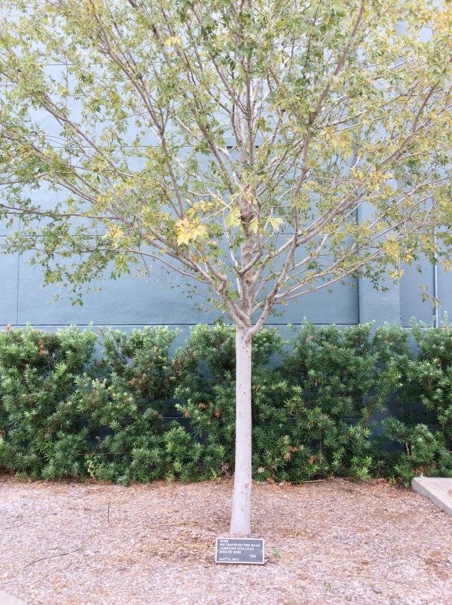 tree-epitaph-1
