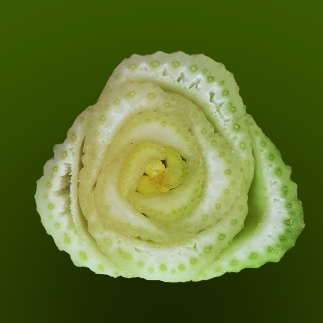 beauty-of-celery