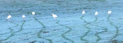 birds-leave-tracks