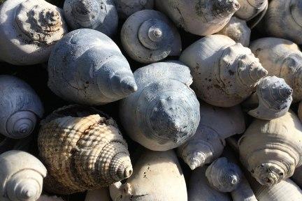 shellscape-mini