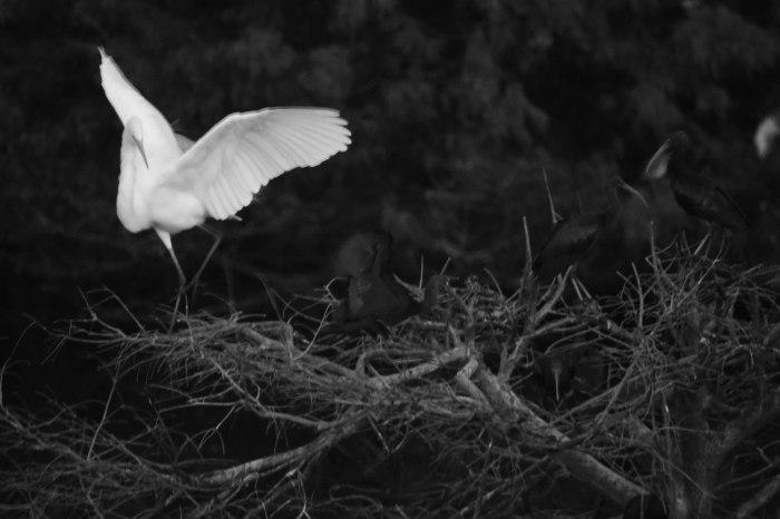 dancing-bird